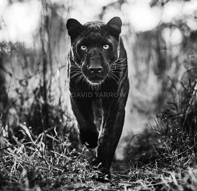 Read more about the article David Yarrow – Wild Encounter