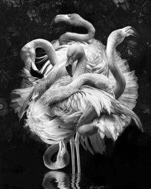 Marcel Van Luit – Flamingo 70×90