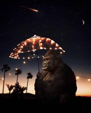 Marcel Van Luit – Gorilla 120×150